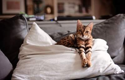 Чем можно заразиться от домашних животных