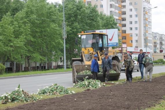 В среднем один день с тюльпанами обошелся Сургуту в 250 тысяч рублей // ФОТО