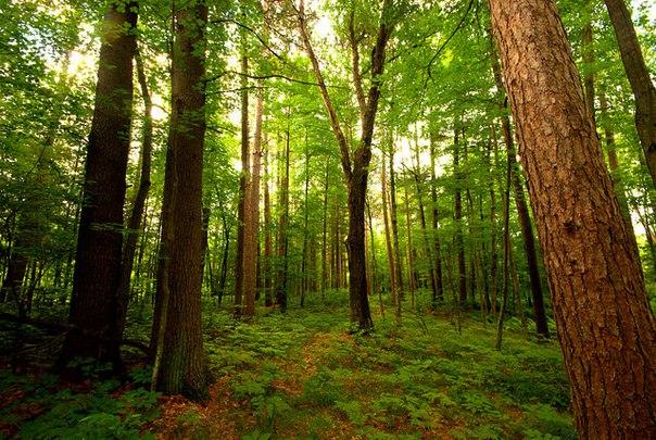 В тольяттинском лесу нашли тело погибшего мужчины