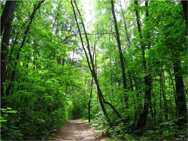 Внимание! В Тольятти запрещено посещение лесов