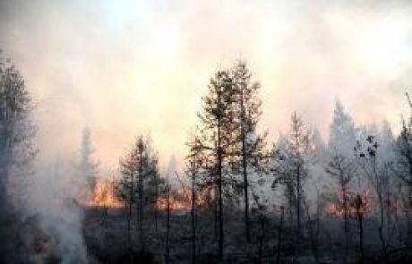 В Сургутском районе горят леса