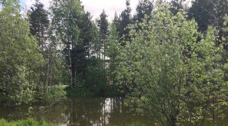 В пруду 37 микрорайона Сургута утонул 11-летний ребенок