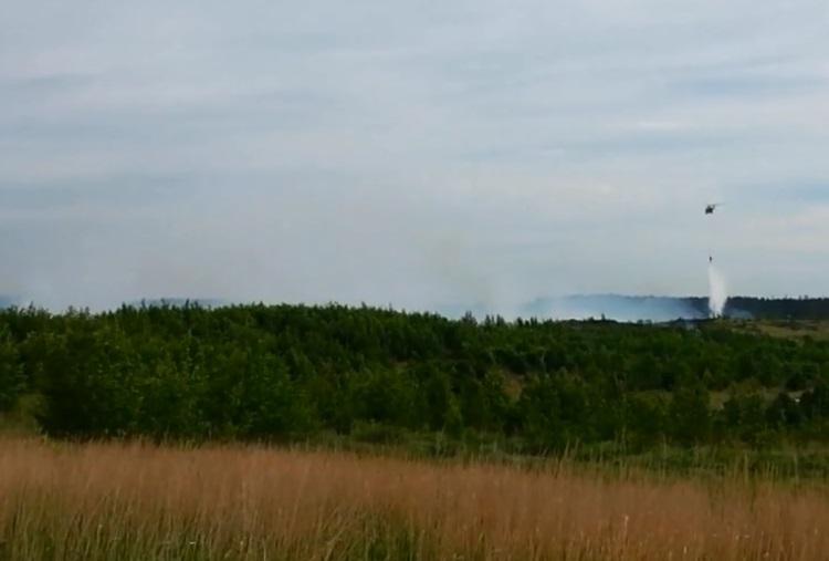 Сергей Анташев сообщил, что в Тольятти сгорело 3 гектара леса