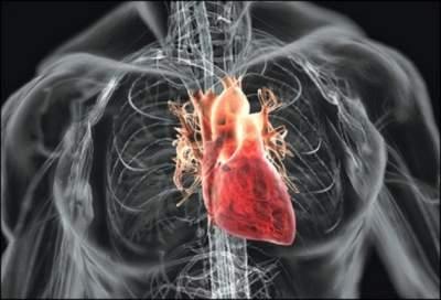 Простые рецепты для укрепления сердца и сосудов