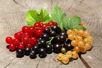 Диетологи назвали самую полезную летнюю ягоду