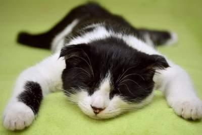 Медики рассказали, полезно ли спать днем
