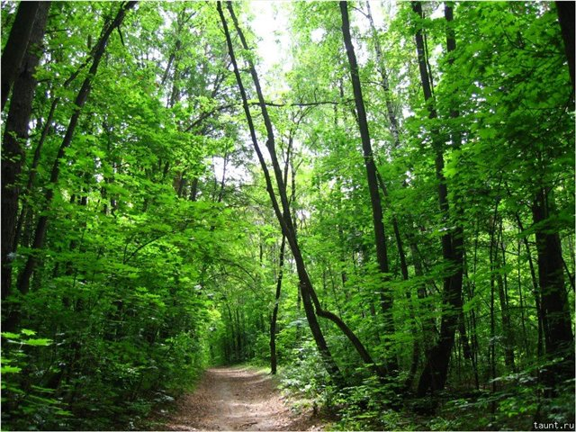 Погибшие и вырубленные леса обязали восстанавливать