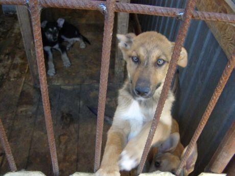 Завтра сургутские волонтеры заберут из службы отлова 110 собак. Чем можно помочь?