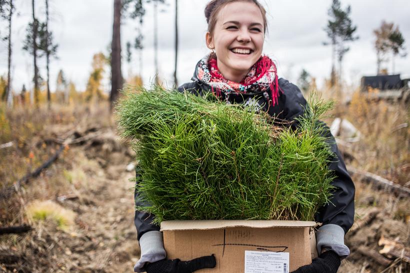 Тольяттинцы могут рассчитать, сколько должны посадить деревьев за использование транспорта