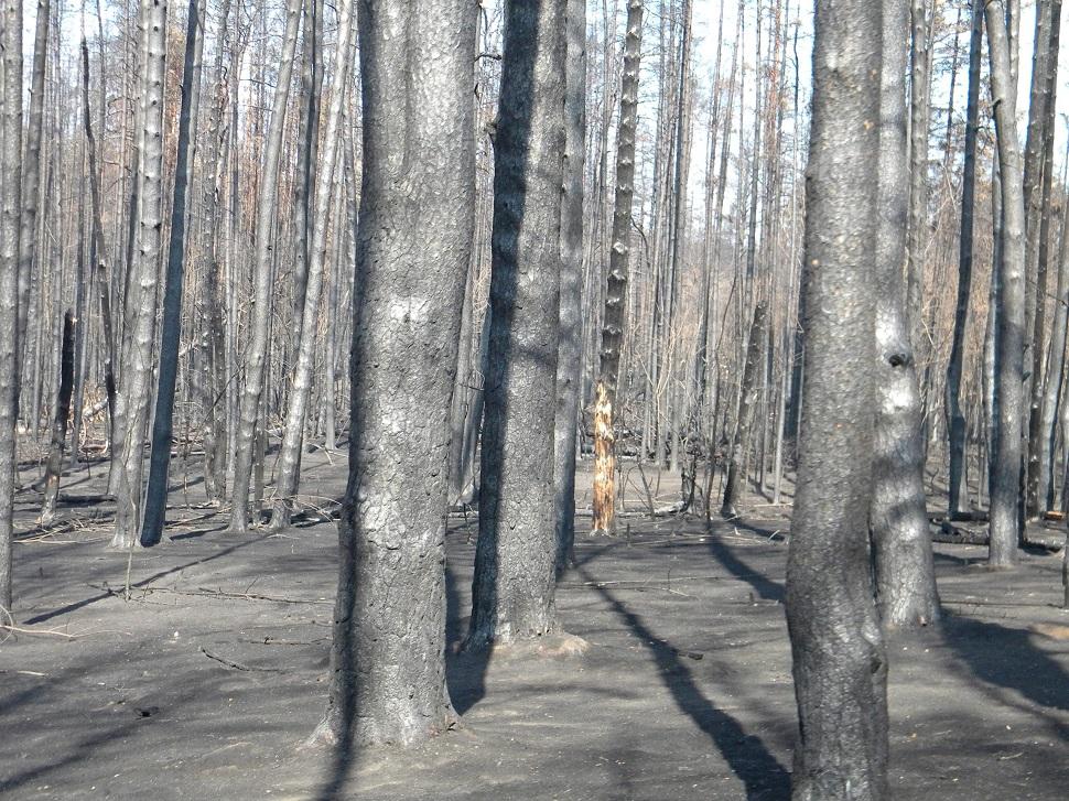 Тольяттинцы пытаются окончательно спалить свой лес?
