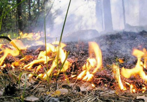 В регионе объявлена чрезвычайная пожарная опасность лесов
