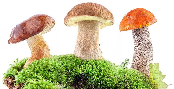 Опрос: Самарская область попала в число самых грибных регионов страны
