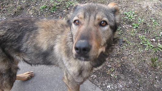 В Тольятти собака откусила мужчине нос