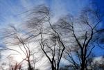 В Самарской области ожидается сильный ветер и гроза