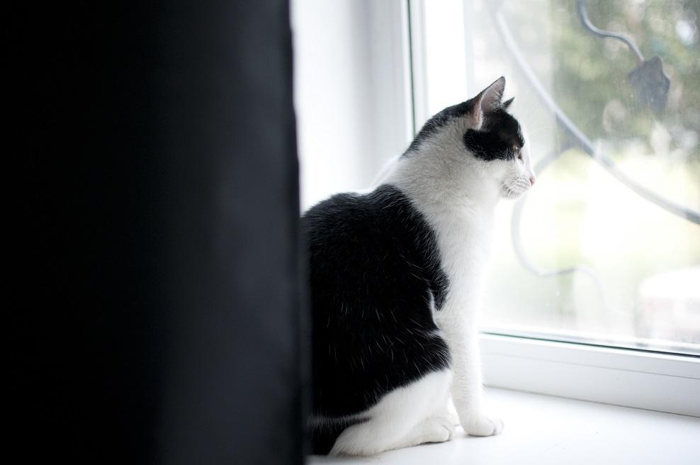 «Решение непродуманное»: Запрет на содержание в квартире тольяттинцев более двух животных проверят на федеральном уровне