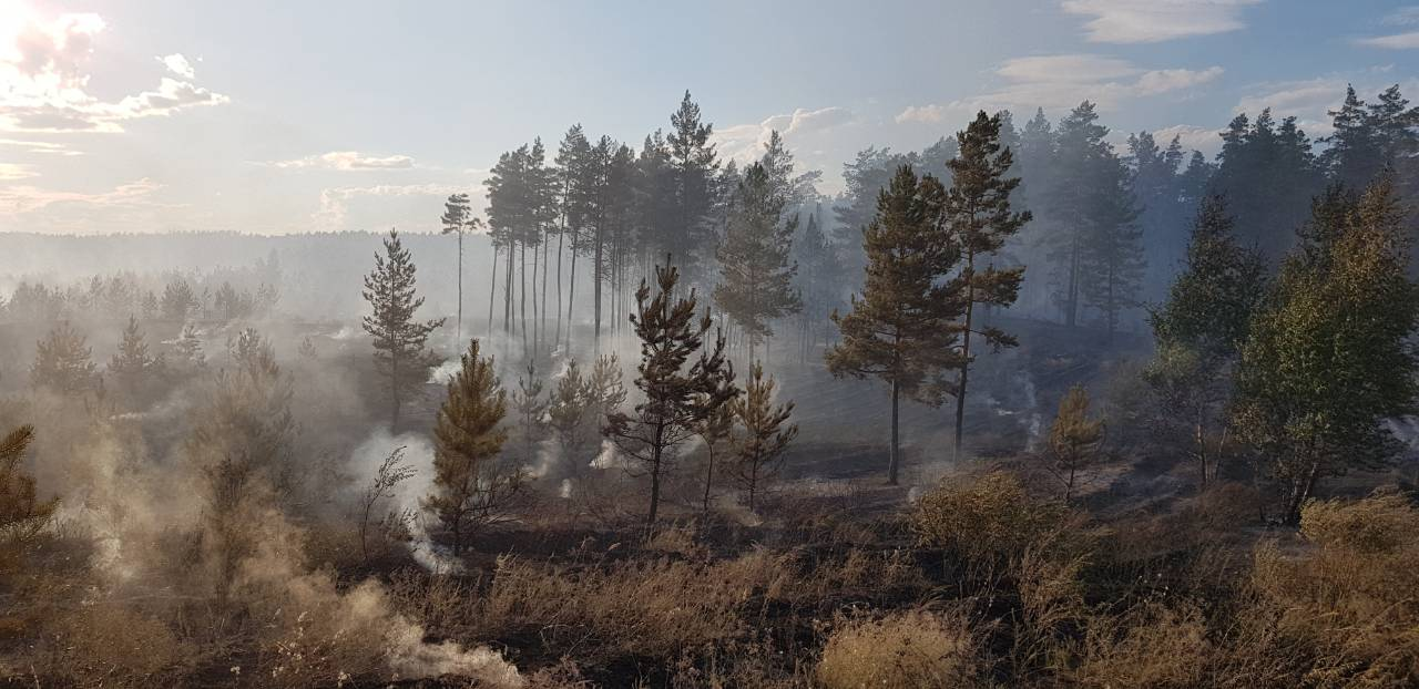 Тольяттинский лес горит, но поджигатели не пойманы