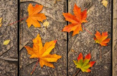 Названы проблемы со здоровьем, которых можно избежать осенью