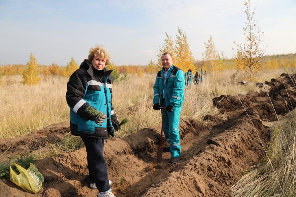 Макулатура помогла высадить в Тольятти 1,7 га нового леса