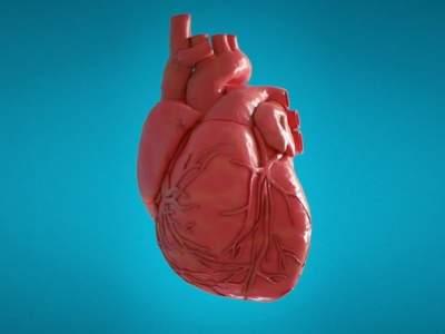 Ученые открыли вещество с необычным влиянием на сердце