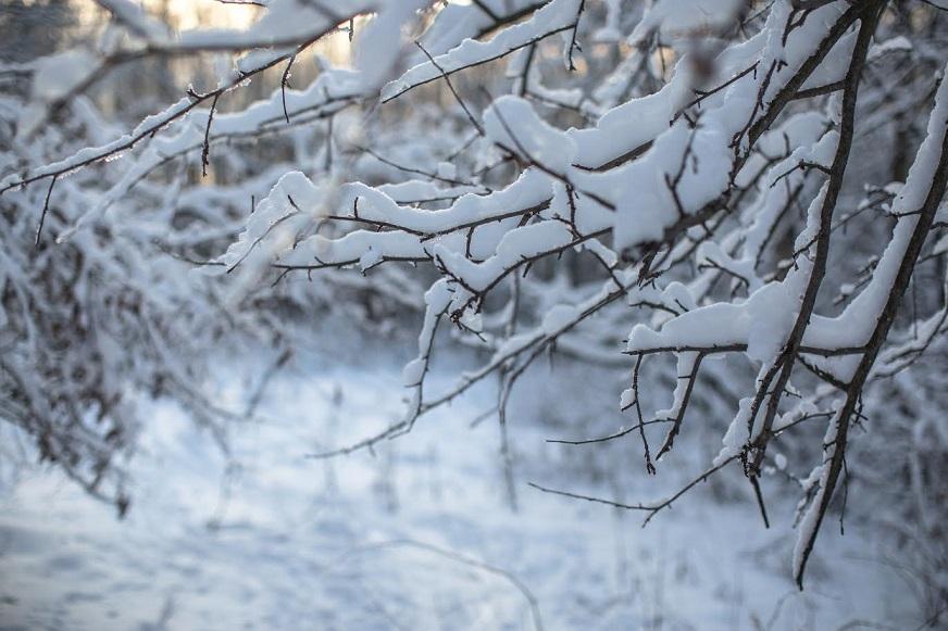 Теплее обычного: Синоптики рассказали о погоде в декабре