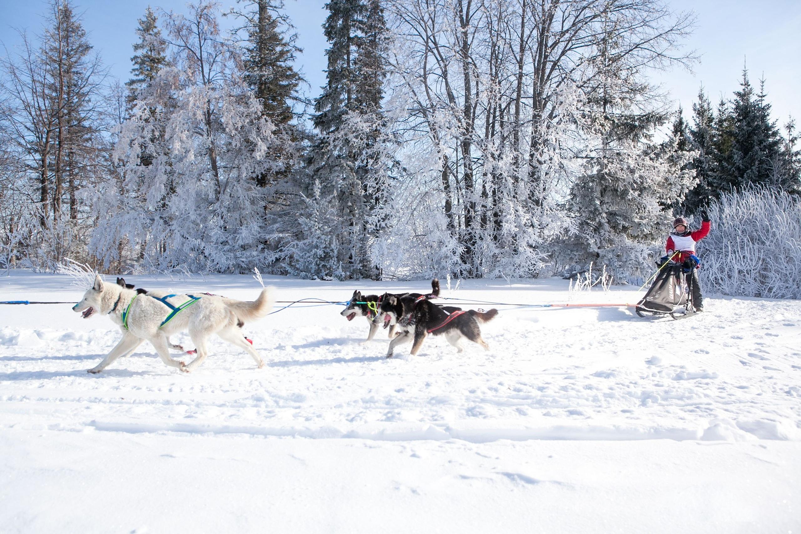 Выходные в Тольятти: катание на собаках, битва поэтов и поющие чаши