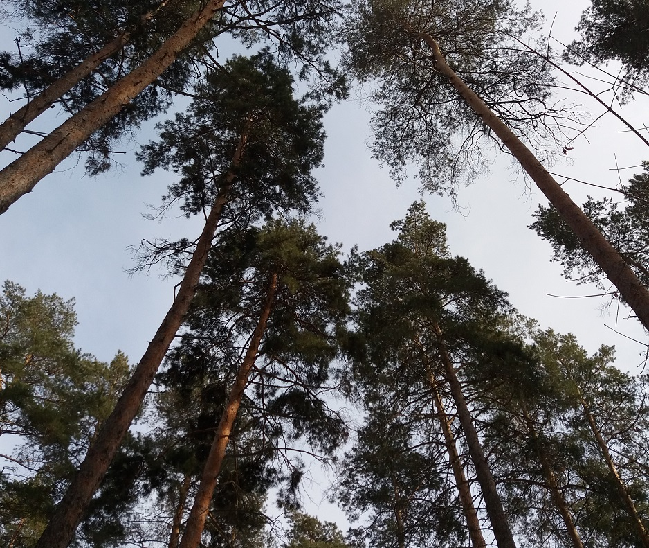 Неделя Тольятти: Теплотрасса через лес, строительство онкоцентра, город готовится к Новому году