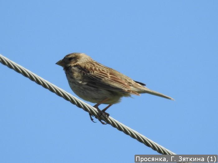 В «Жигулевском заповеднике» сфотографировали птицу, сведения о которой не поступали более 50 лет