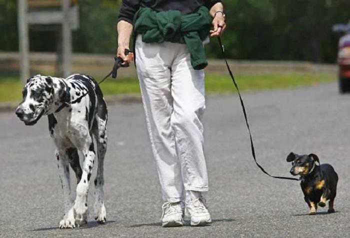 В России запрещают контактные зоопарки и вводят правила выгула собак