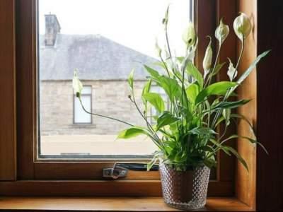 Медики рассказали, какие домашние растения укрепляют здоровье